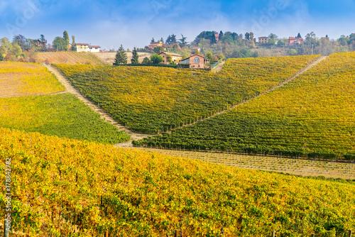 Vineyards of Piedmont in autumn, Italy Canvas Print