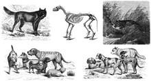Dog Old Illustration.