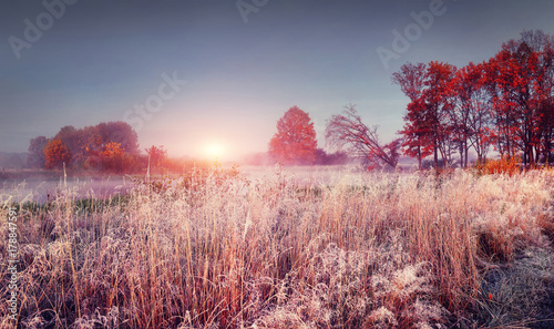 Frosty autumn landscape of november nature at sunrise. Scenery colorful autumn with hoarfrost