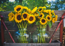 Colorful Sunflowers In Vases I...