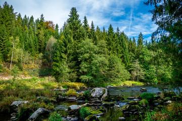 Bäume mit Gras und Fluss im Herbst im Bayerischen Wald
