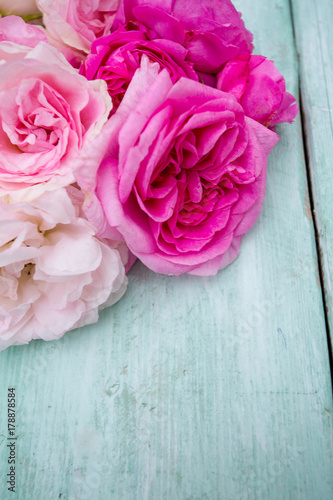 beautiful-garden-roses-on-turquoise-wooden-surface