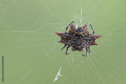 Foto op Plexiglas Textures Spider on a web
