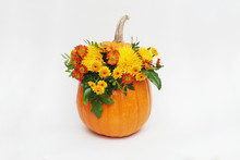 Pumpkin Autum Ncolorful Flower...