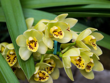 Yellow Orchid Group