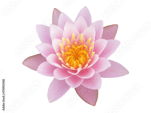 Poster de jardin Nénuphars Sweet lotus flower on white background, with clipping path