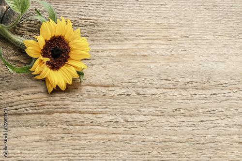 In de dag Zonnebloem Single sunflower on wooden background, copy space.