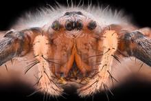 Extreme Magnification - Wasp Spider, Argiope Bruennichi