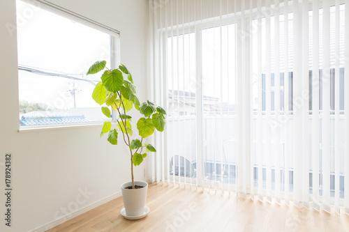 Obraz na plátně 観葉植物