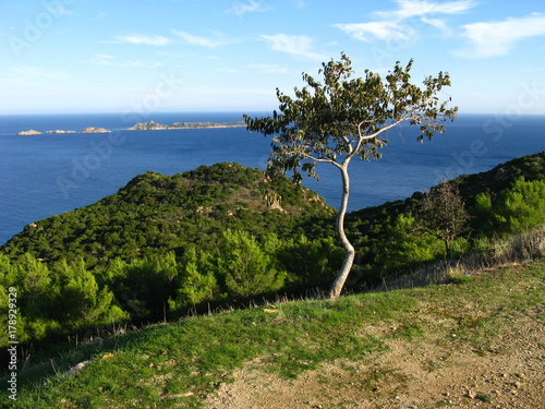 Foto  Baum an der Küste