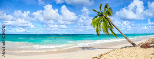 Foto op Canvas Palm boom Coconut Palm tree on white sandy beach in Punta Cana, Dominican Republic. Panoramic view.