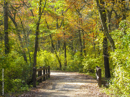 A Path Through The Woods On An Autumn Day In Belmont Lake