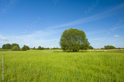 Recess Fitting Culture Large tree on a green meadow