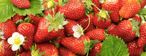A lot of strawberry in high resolution