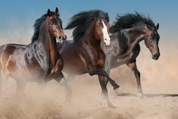 Horses run free in dust