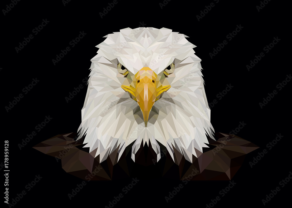 American bald eagle, eagles, photo, print, picture, bird, birds