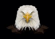 American Bald Eagle, Eagles, P...
