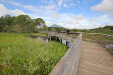 Wakodahatchee Wetlands In Delray Beach, Florida Has A Three Quarter Mile Boardwalk That Crosses Between Open Water Pond Areas And Emergent Marsh Areas And Is Part Of The Great Florida Birding Trail.