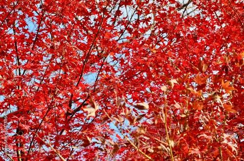 Keuken foto achterwand Rood traf. 日本 東京 芝大門 芝 増上寺 Japan tokyo shiba shiba daimon zoujoji temple