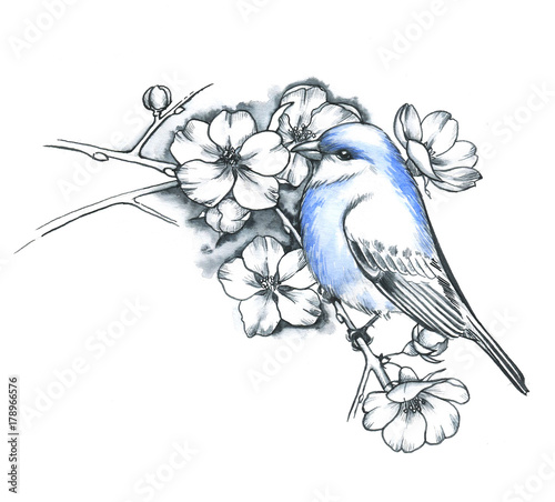 Hand Drawn Line Art Ink And Watercolor Blue Bird With The