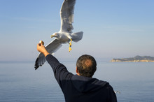 Feeding Gulls From The Hands O...