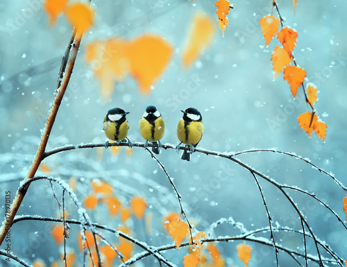 Photo Stands Bird portrait of three cute birds Tits in the Park sitting on a branch among bright autumn foliage during a snowfall