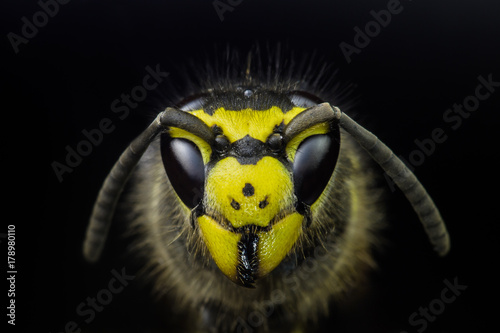 In de dag Macrofotografie Wasp head macro