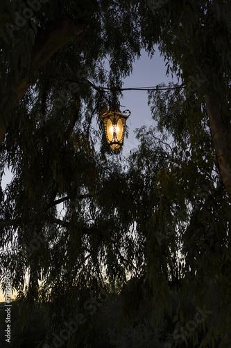 Photo Stands Lavender light