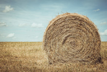 Round Bale Of Hay In A Freshly...