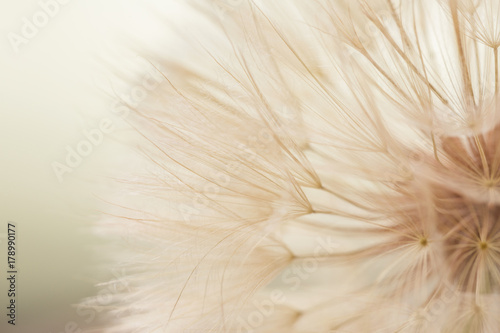 Aerial dandelion on yellow, beige background. Relax, air.copy space