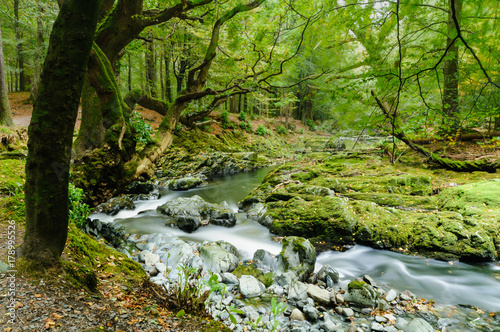 Photo  Shimna River, Newcastle, Northern Ireland