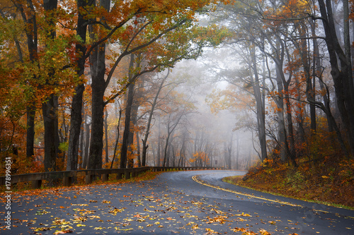 foggy ride Canvas Print