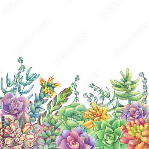 granica-z-liscmi-soczysta-kolekcja-ucculents-akwarela-recznie-rysowane-malarstwo-ilustracja-na-bialym-tle
