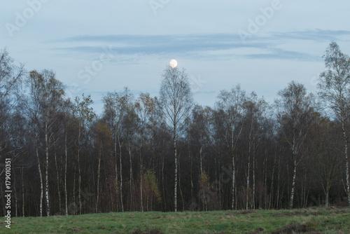 Mond Schein Wald und Heide © darknightsky