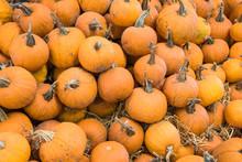 Pumpkin Heap Background