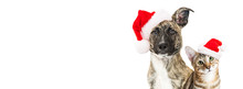 Christmas Dog And Cat Website ...