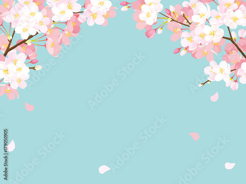 Photo 桜 背景イラスト