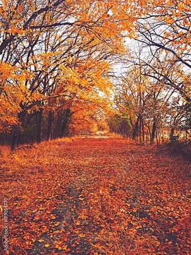 Fototapety, obrazy: fall