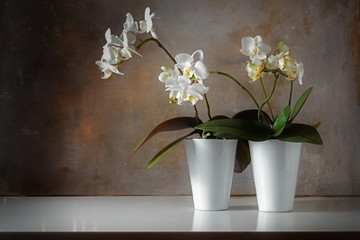 Fototapeta na wymiar potted white orchids (Phalaenopsis) on a shiny sideboard in front of a rough vintage wall, decoration with contrast between old and modern, copy space