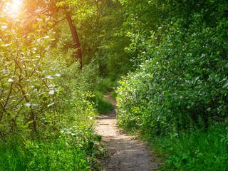 Fototapeta na wymiar A dirt road in the woods
