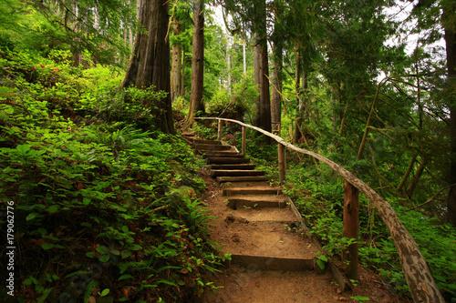 zdjęcie leśnego szlaku Pacific Northwest