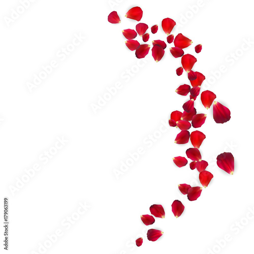 Background of Naturalistic Rose Petals. Vector Illustration