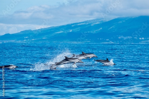 Photo sur Toile Dauphin Wild dolphins in the Azores