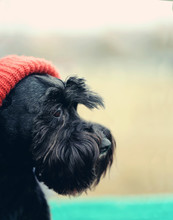 Black Funny Cute Dog With Red ...