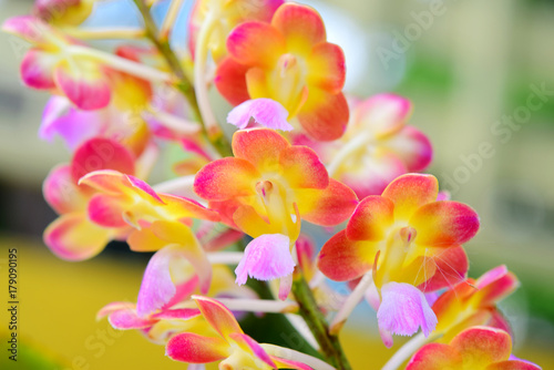 colorful-orchid-blooming-in-na