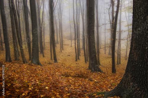rainy day in autumn park