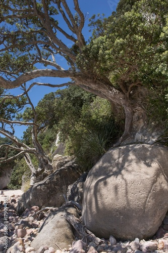 Foto op Canvas Cathedral Cove Cathedral Cove Coromendal New Zealand