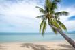 Coconut trees stretch into the sea