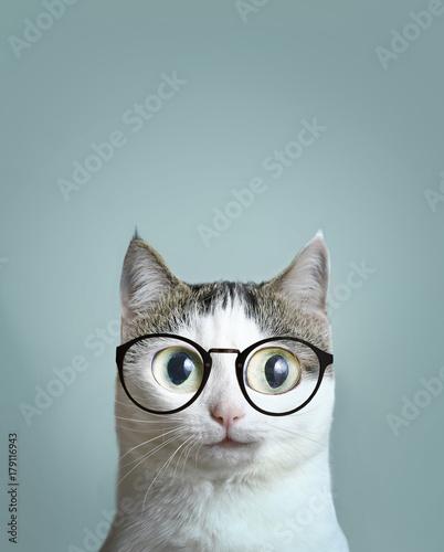 Fotomural  close up art portrait of blue eyed cat in short sight myopia correction glasses