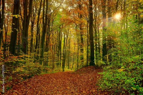 Tuinposter Weg in bos jesień w rezerwacie buków
